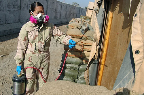 Pest Controller in Iraq
