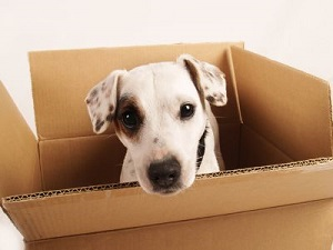 Cute Dog in a Box