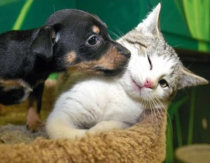 Understanding Dog and Cat Behavior