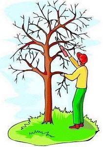 Garden Tree Pruning