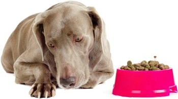 cute dog refuses eating